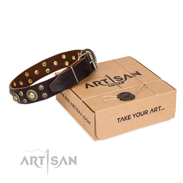 Fancy walking dog collar of strong full grain genuine leather with studs