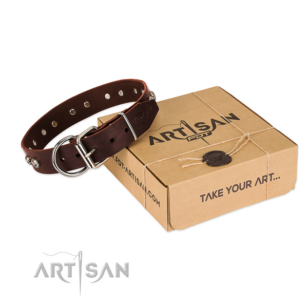 Durable traditional buckle on dog collar for daily use