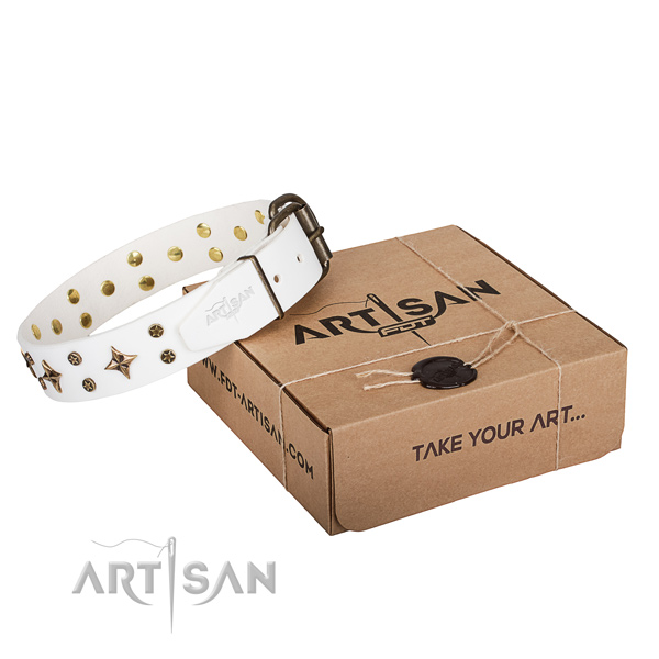 Everyday walking dog collar of top quality natural leather with studs