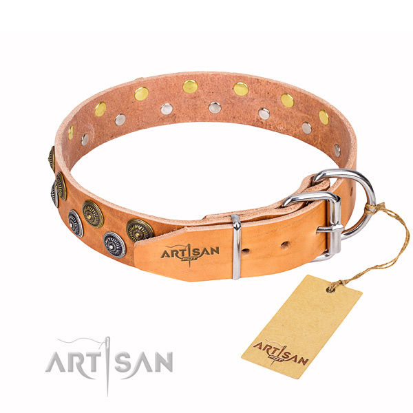 Daily walking studded dog collar of quality full grain genuine leather