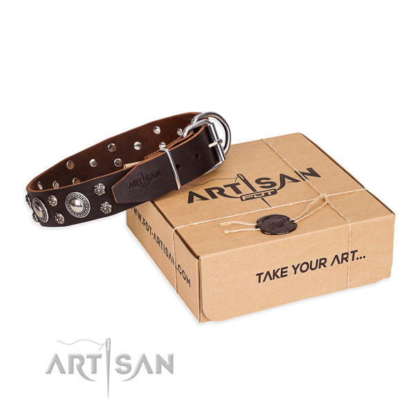 Everyday walking dog collar of quality natural leather with embellishments