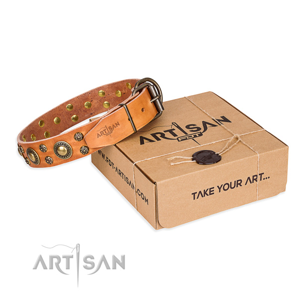 Stylish walking dog collar of best quality full grain leather with decorations