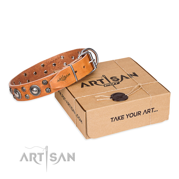 Fancy walking dog collar of durable full grain genuine leather with studs