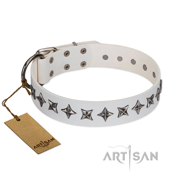 Everyday use dog collar of quality full grain genuine leather with studs
