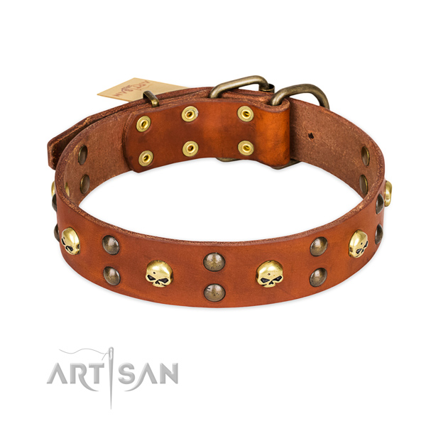 Stylish walking dog collar of high quality natural leather with embellishments