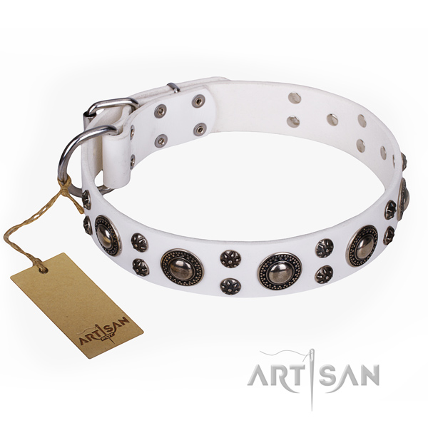 Fancy walking dog collar of fine quality leather with embellishments