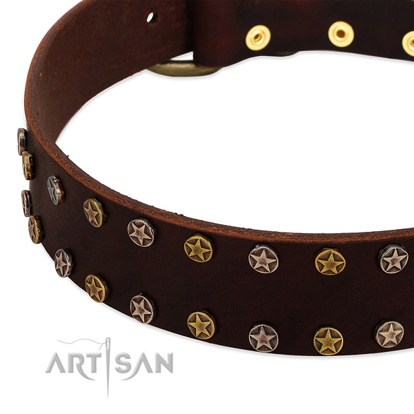 Everyday walking full grain genuine leather dog collar with remarkable studs