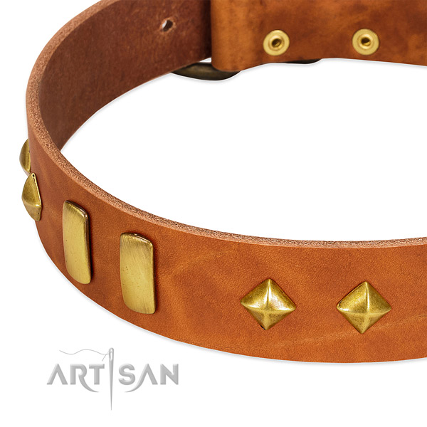 Daily use full grain genuine leather dog collar with stylish design embellishments