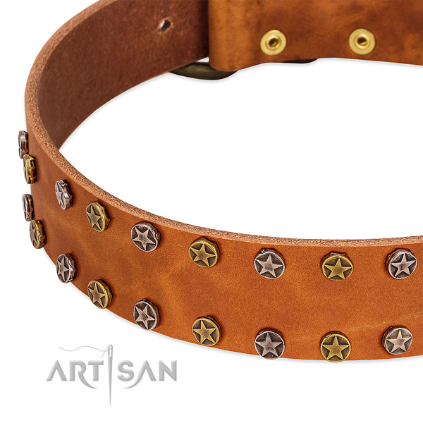 Daily walking natural leather dog collar with significant adornments