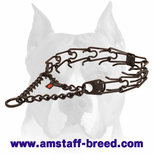Pinch collar of black stainless steel for badly behaved pets