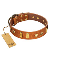 """Egyptian Script"" FDT Artisan Tan Leather Amstaff Collar with Plates and Small Studs"