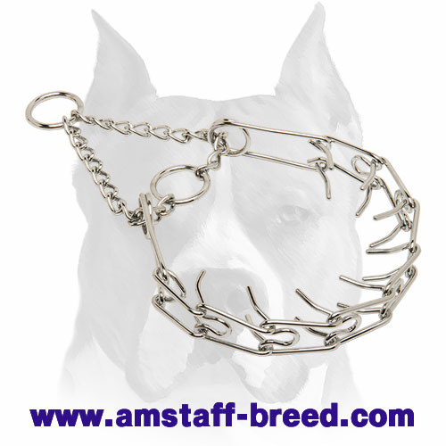 Chrome Plated Dog Collar for Amstaff