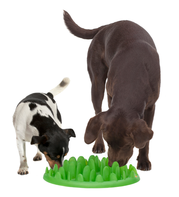Amstaff breed big plastic dog feeder
