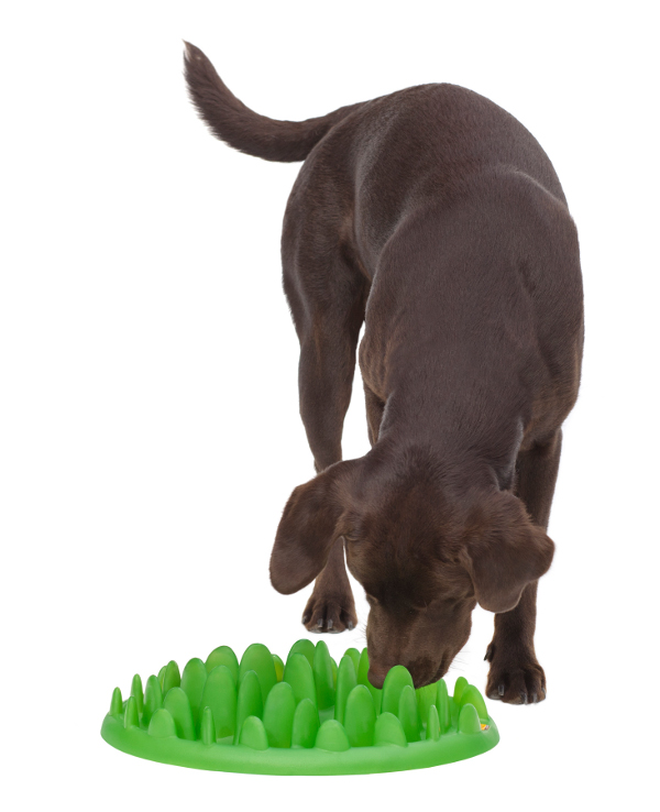Amstaff breed Grassy design pet feeder