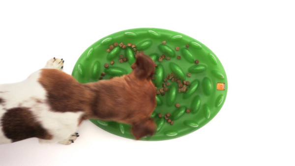 Funny and healthy eating Amstaff pet feeder