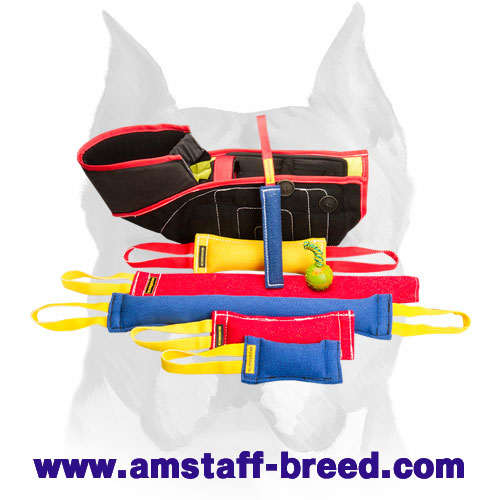 Amstaff training set for puppies