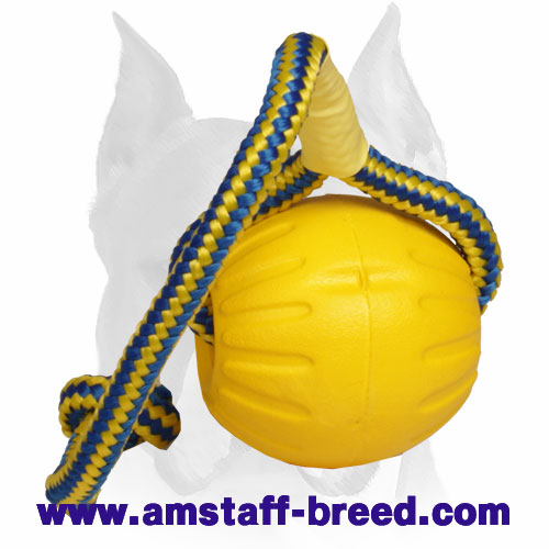 Amstaff interactive toy for training and playing