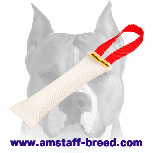 Amstaff sturdy puppy bite tug for training and playing