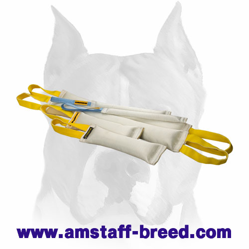 Strong training set of tugs for training Amstaff