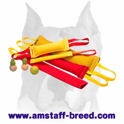Huge training set for Amstaff