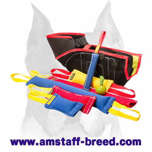 Amstaff reliable set for training puppies