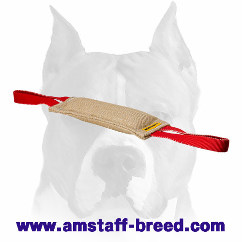 Amstaff puppy bite tug with 2 handles for training and playing
