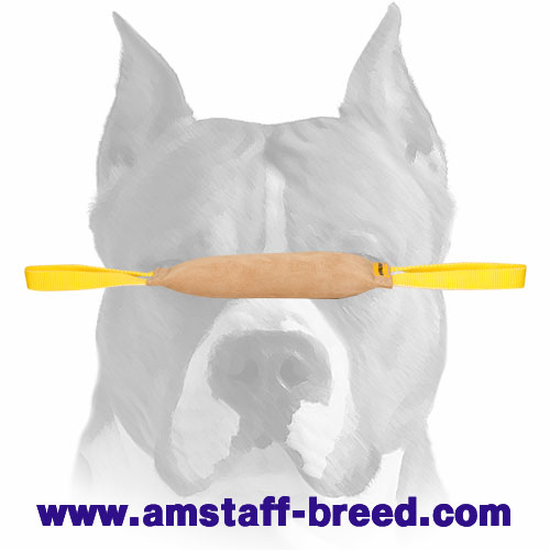 Amstaff tug for bite skills developing and improving