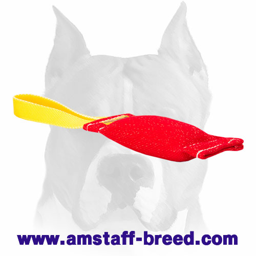 French linen Amstaff puppy tug for bite training