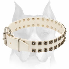 Exclusive design leather dog collar with studs for Amstaff