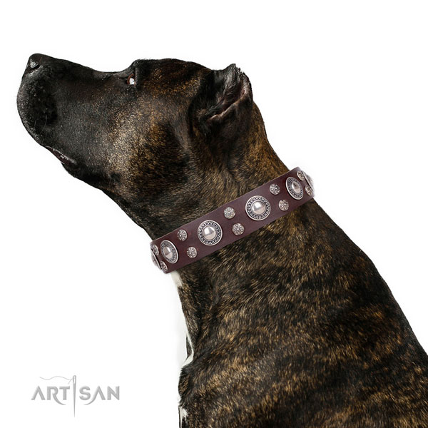 Stylish walking studded dog collar of durable genuine leather