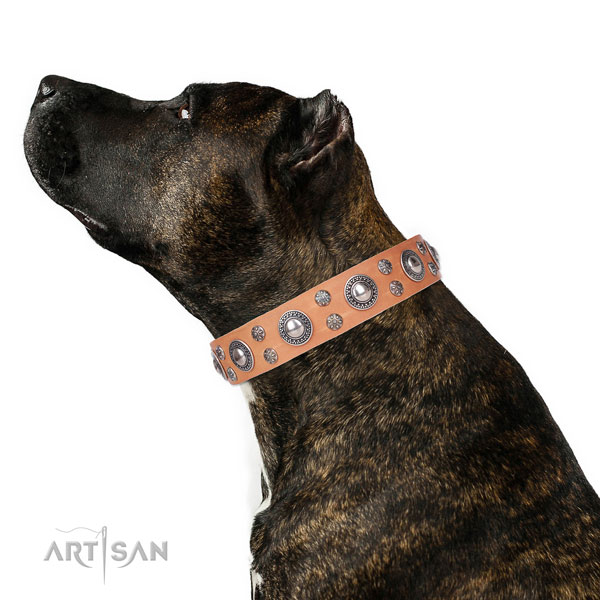 Handy use embellished dog collar of quality natural leather