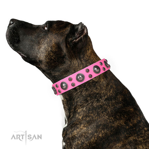 Daily walking adorned dog collar of strong leather
