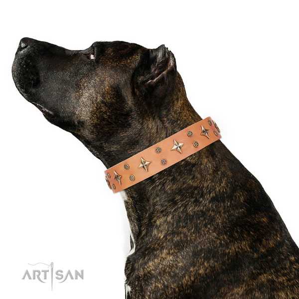Daily use adorned dog collar of fine quality material