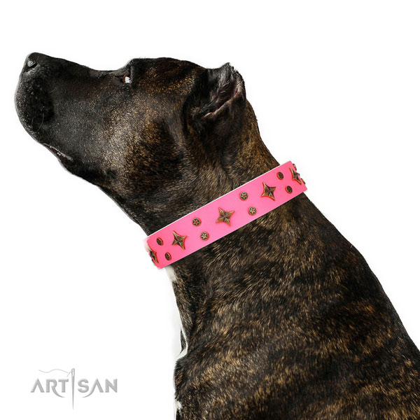 Handy use decorated dog collar of high quality material