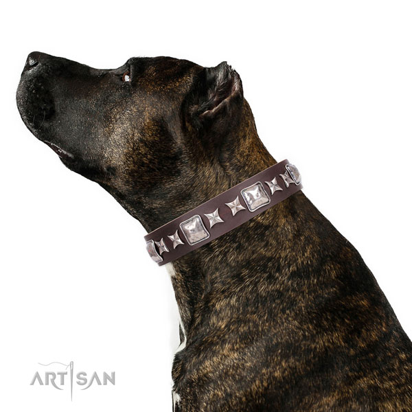 Easy wearing adorned dog collar of top notch material