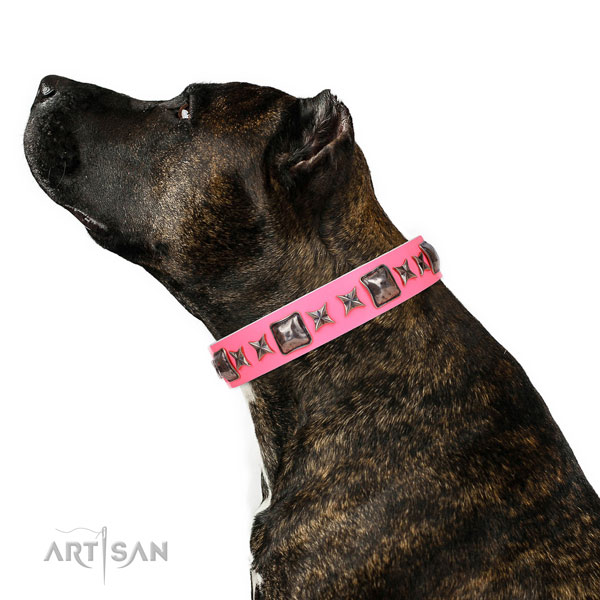 Unusual embellished genuine leather dog collar for fancy walking