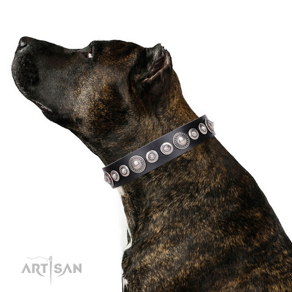 Amazing adorned natural leather dog collar for comfy wearing