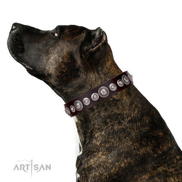 Extraordinary embellished genuine leather dog collar for comfy wearing