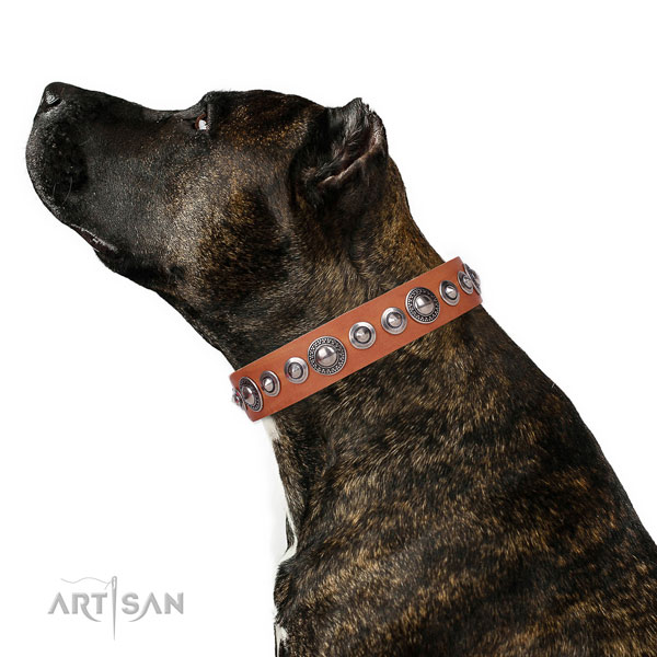 Awesome decorated genuine leather dog collar for easy wearing