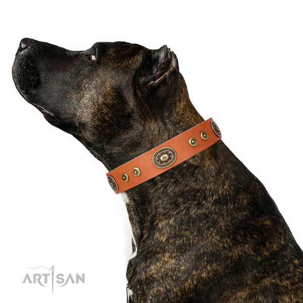Stylish design decorated genuine leather dog collar for walking
