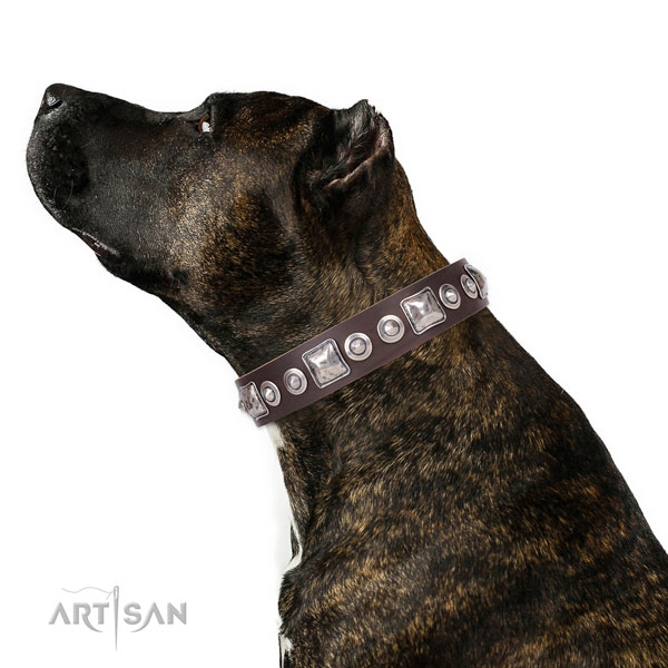 Stylish design studded genuine leather dog collar for walking