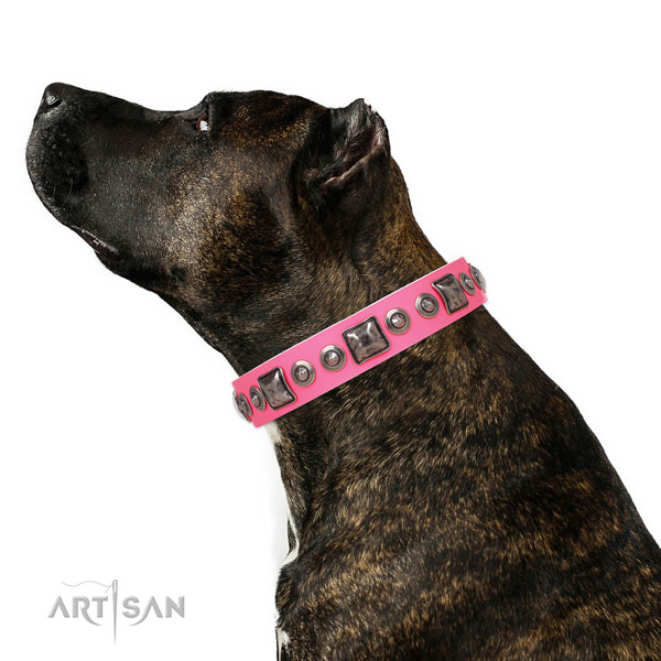 Stylish adorned genuine leather dog collar