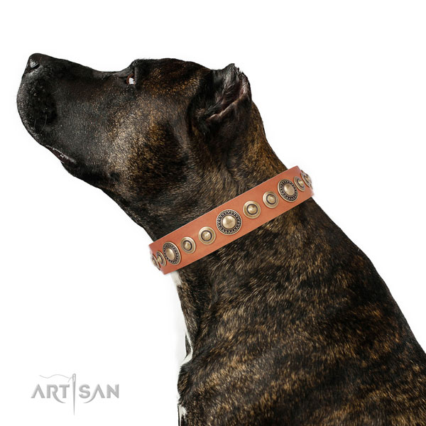Reliable buckle and D-ring on full grain leather dog collar for everyday walking