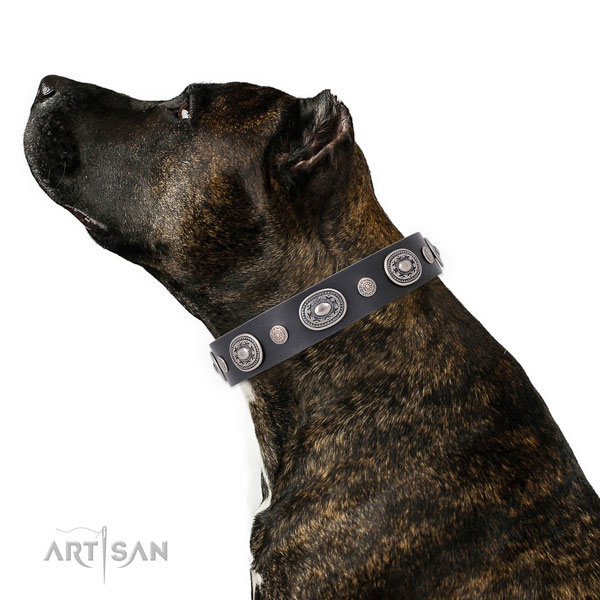 Corrosion resistant buckle and D-ring on natural leather dog collar for stylish walks