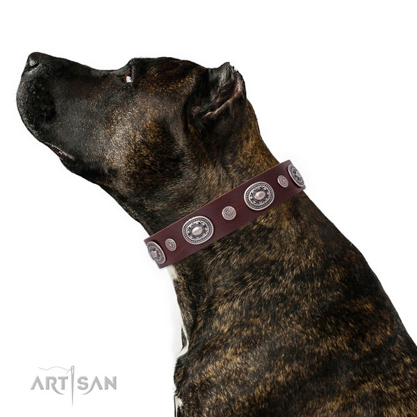 Reliable buckle and D-ring on full grain leather dog collar for stylish walking