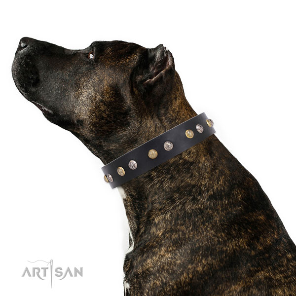 Full grain leather dog collar with strong buckle and D-ring for stylish walking