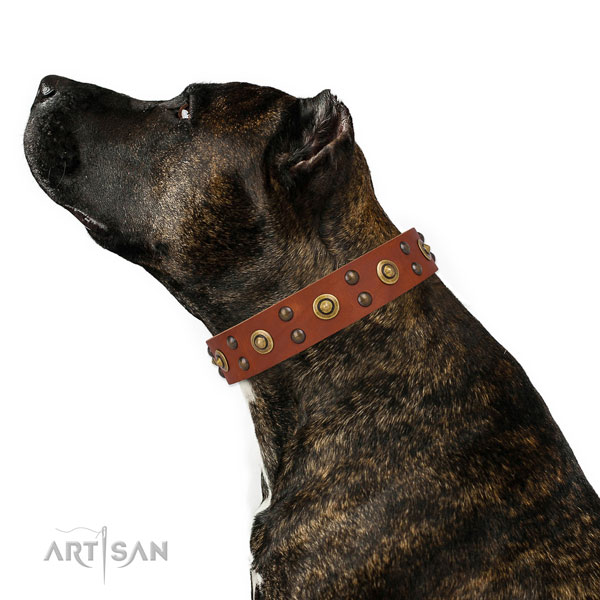 Basic training dog collar with incredible adornments