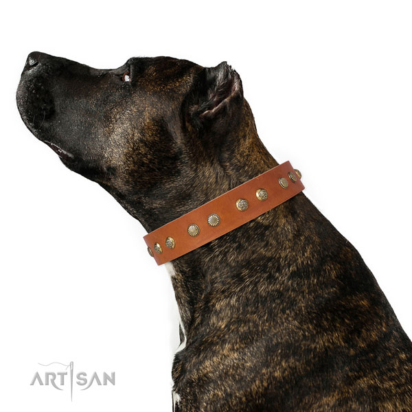 Unique decorations on walking genuine leather dog collar