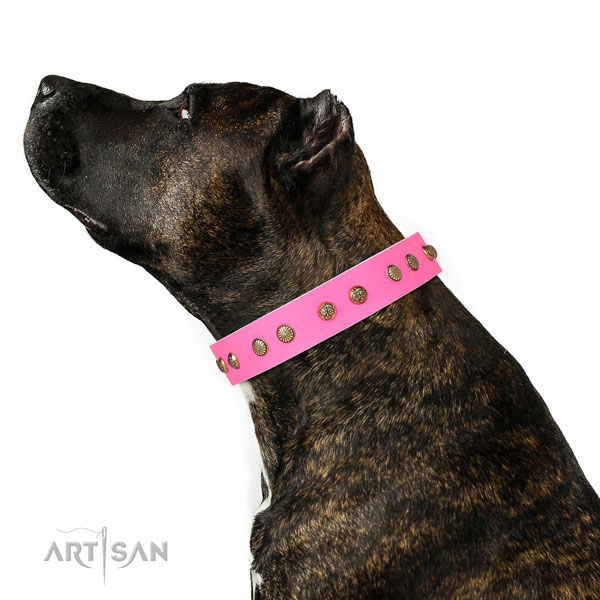 Unique studs on daily use full grain genuine leather dog collar