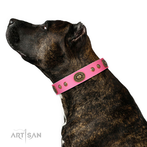 Extraordinary decorations on easy wearing dog collar